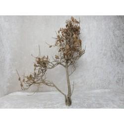 Strauch / Baum