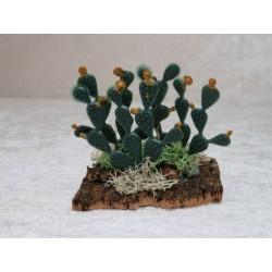 Kaktusfeigen 7 cm