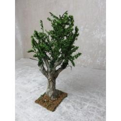 Olivenbaum 13 cm