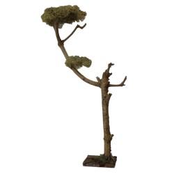 Ölbaum, Olivenbaum  48 cm