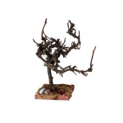Ölbaum verknorpelt 19,5 cm
