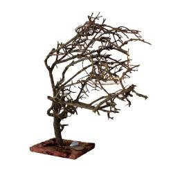 Ölbaum verknorpelt 32,5 cm