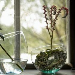 Terrarium Bowl Innis Recycled Glas