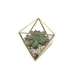 Geometrisches Terrarium aus Glas