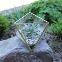 Geometrisches Terrarium aus Glas, Dreieck