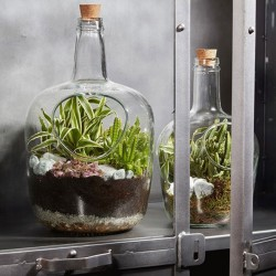 Bottle terrarium Daniel H30 D19