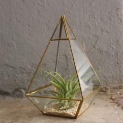Geometrisches Terrarium aus Glas, Pyramide, Vase für Sukkulenten