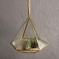 Geometrisches Terrarium Diamant