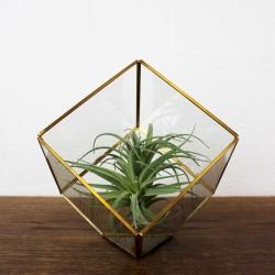 Quadratische Gold Terrarium