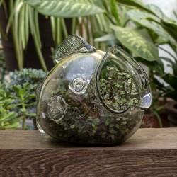 Blumentopf Fisch, Terrarium