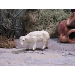 Schaf äsend