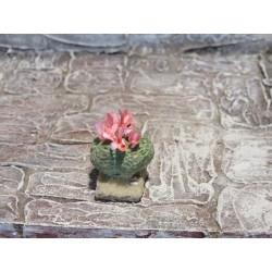Kaktus, Kugelkaktus mit Blüten