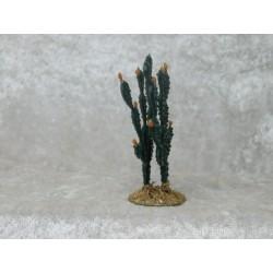 Kaktus doppelt 6 cm