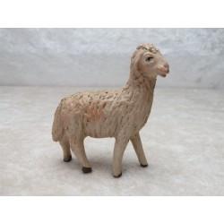 Schaf rechst schauend