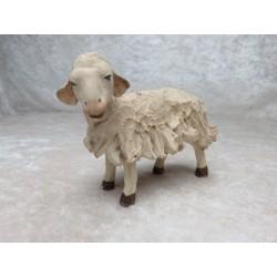 Schaf links schauend