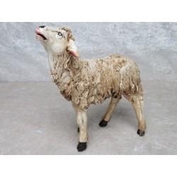 Schaf in die Luft schauend